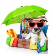 Summer holiday dog — Stock Photo #26701971