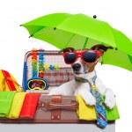 Summer holiday dog — Stock Photo