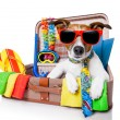 Summer holiday dog — Stock fotografie