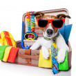 Summer holiday dog — Stockfoto