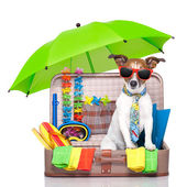 Summer holiday dog — Foto de Stock