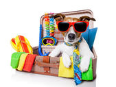 Summer holiday dog — Foto Stock