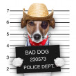 Bad mexican dog — Foto Stock