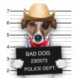 Bad mexican dog — Stock Photo
