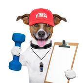 Fitness dog — Stock Photo