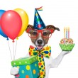 Stock Photo: Birthday dog