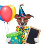 Birthday dog — Stock Photo #27185781
