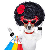 Shopaholic diva dog — Stock Photo