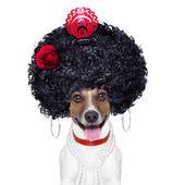 Perro español — Foto de Stock