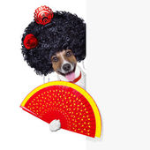 İspanyol köpeği — Stok fotoğraf