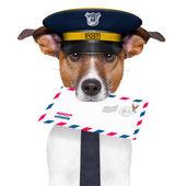 Mail dog — Stock Photo