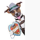 慕尼黑啤酒节的狗 — 图库照片