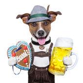 Oktoberfest dog — Stock Photo