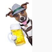 Oktoberfest dog — Stock Photo
