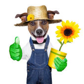 Gardener dog — Stock Photo