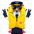 Pilot dog — Stock Photo