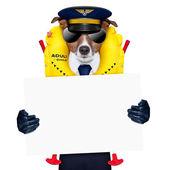 Pies pilota — Zdjęcie stockowe