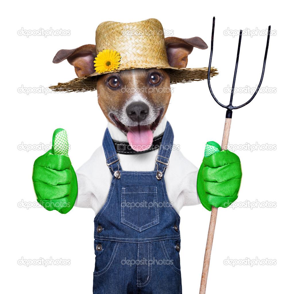 perro granjero feliz con el pulgar hacia arriba sosteniendo un tridente — Foto de damedeeso - depositphotos_28672283-farmer-dog