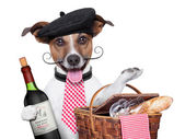 French dog — Stock Photo