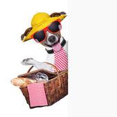 Pies piknik — Zdjęcie stockowe