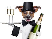 Dog toasting — Stock Photo