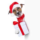 Hello goodbye christmas dog — Stock Photo
