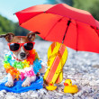 Beach dog — Stock Photo