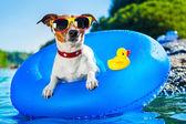 海滩的狗 — 图库照片
