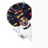 Hairdresser dog — Stock Photo