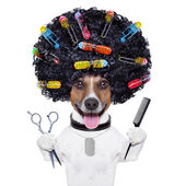 Hairdresser dog with curlers — Stock Photo