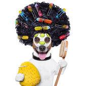 Wellness dog — Stock Photo