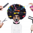 Hairdresser scissors comb dog spray — Stock Photo #29850421