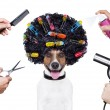 Stock Photo: Hairdresser scissors comb dog spray