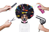 Hairdresser scissors comb dog spray — Stock Photo