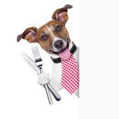 Hungry dog — Stock Photo