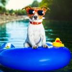 Summer beach dog — Stock Photo #29957581