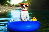 Summer beach dog — Foto de Stock