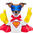 Stock Photo: Super hero dog