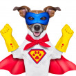 Super hero dog — Stock Photo #31113777