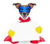 Super hero dog — Stockfoto