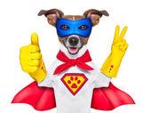 Super hero dog — Stock Photo