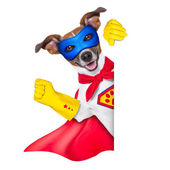 Super hero dog — 图库照片