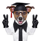Graduate dog — Stock Photo