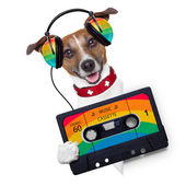 Music dog — Stock Photo