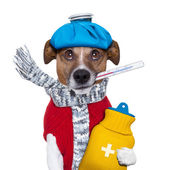 Sick dog with fever — Stock Photo