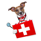 Cão de médico — Fotografia Stock