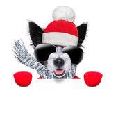 Kış köpek — Stok fotoğraf