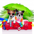 Holiday dogs — Foto Stock