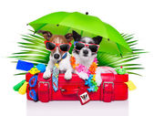 Holiday dogs — Stock Photo