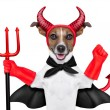 Devil dog — Stock Photo